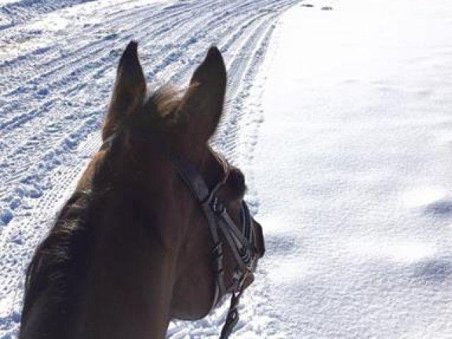 Ausritt_in_einer_traumhaften_Winterlandschaft.jpg