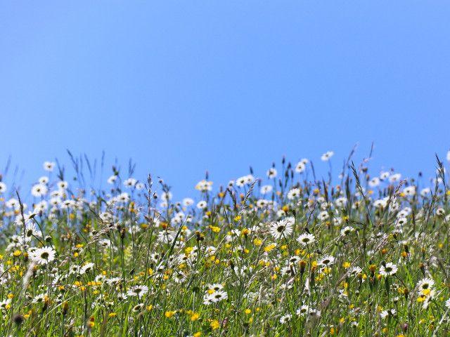 natur-saalachtal-wandern-berge-blumen-4264.jpg