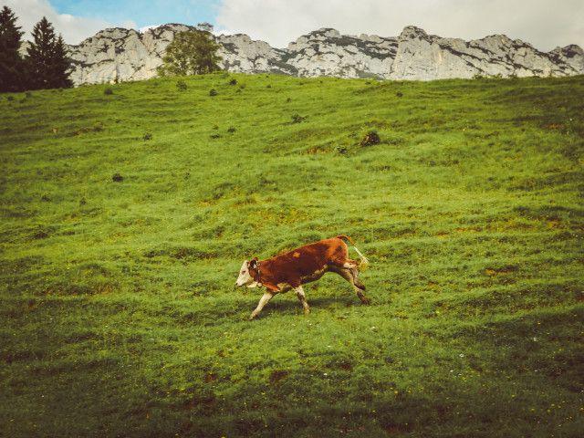 salzburger-saalachtal-9748.jpg