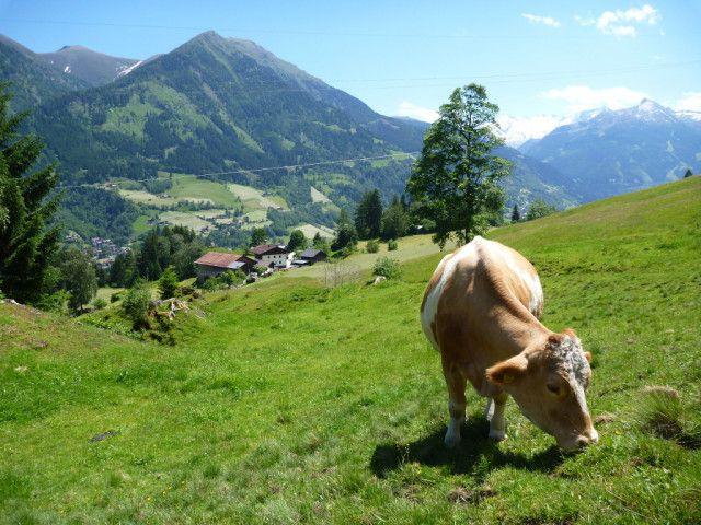 bauernhof-maurachgut-gasteinertal-landwirtschaft.j