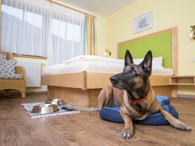 hunde-hotel-salzburger-land.jpg