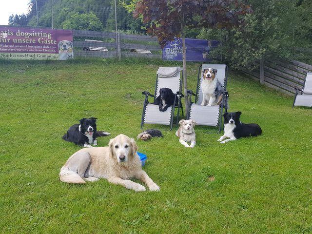 hundefreundliche-unterkunft.jpg